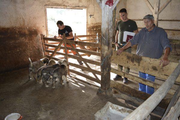 Fundatia Conservation Carpathia 8