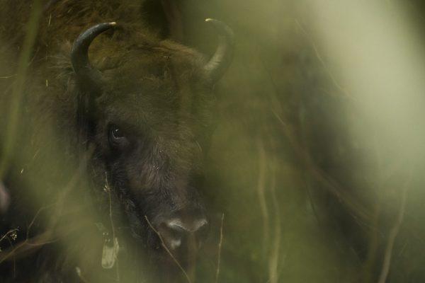 (c) Fundatia Conservation Carpathia_Daniel Mirlea (3)